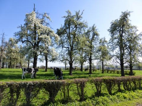 hoogstamboomgaard sGravenvoeren Voervallei