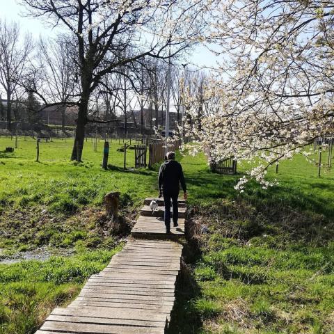 Wandelaar in de natuur in Sint-Truiden