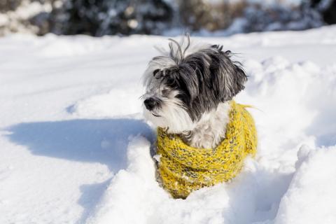 hondje met sjaal in sneeuw