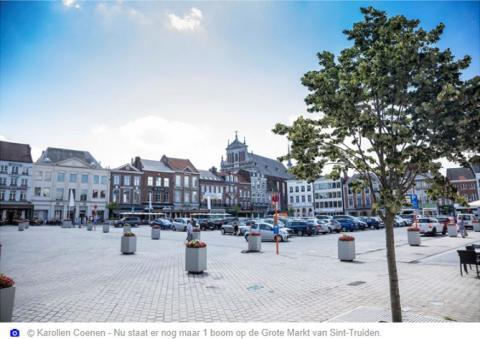 Er staat 1 boom op de Grote Markt in Sint-Truiden